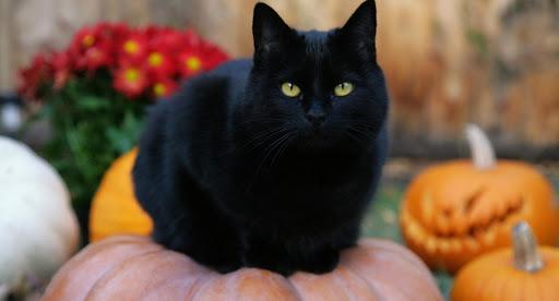 Halloween 2019 - Curiosidades sobre essa comemoração