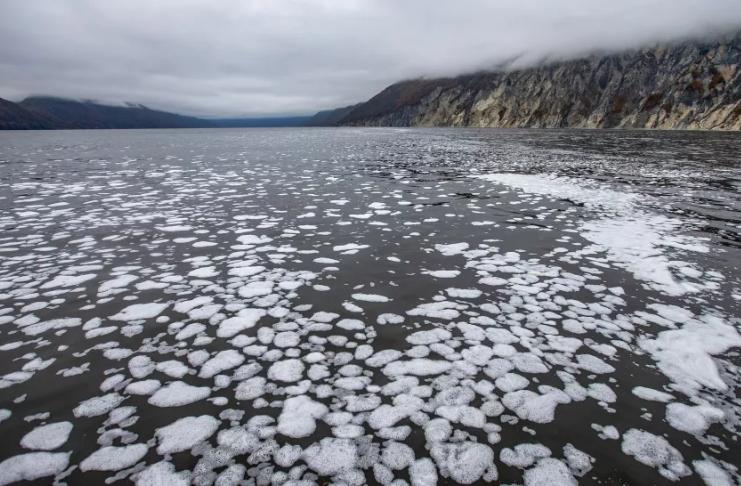 Por que animais mortos estão chegando à costa de uma remota península russa?