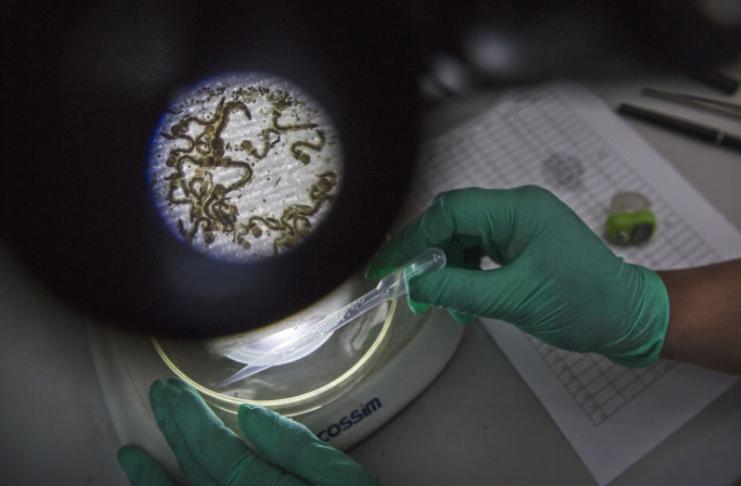 Cientistas pedem um banco global de germes