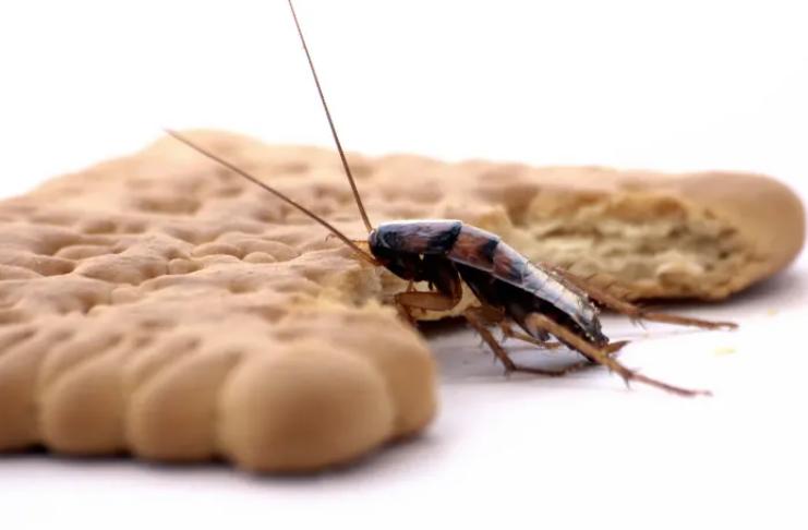 Por que os humanos têm medo de insetos?