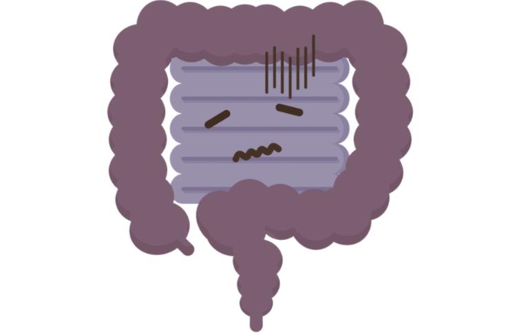 Fábula: E se não houvesse intestino grosso?