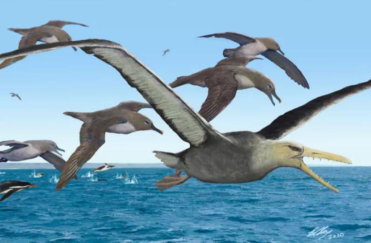 Fósseis de pássaros monstros descobertos na Antártica