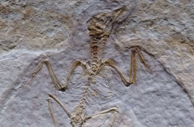 Programa de filtragem censurou a palavra osso em uma conferência de paleontologia