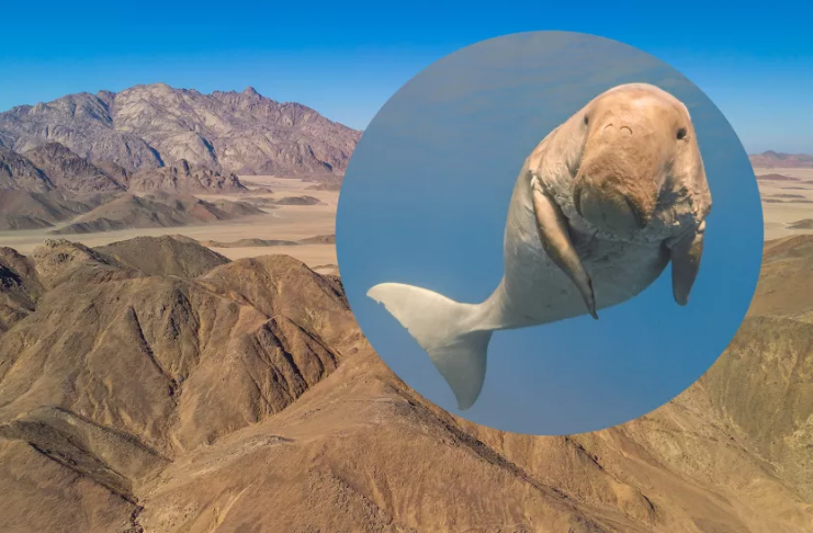 Adoráveis vacas marinhas antigas já nadaram pelo deserto egípcio agora seco