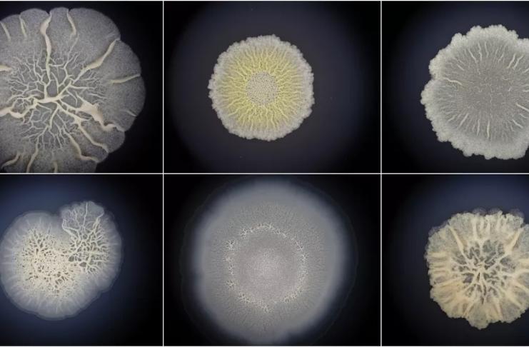 As primeiras formas de vida podem ter sido mais animalescas do que jamais imaginamos