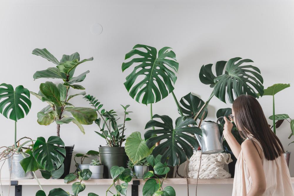 Aplicativo Waterbot - Aprenda como cuidar de plantas